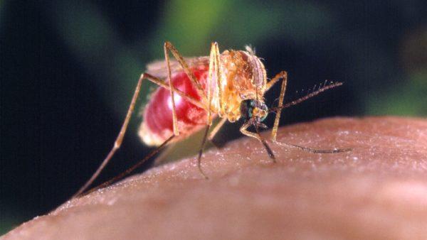 Virus-Spreading Mosquitos Confirmed Locally